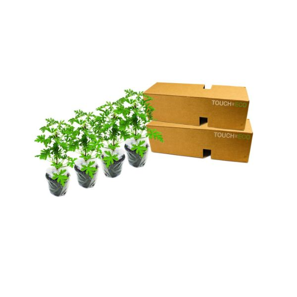 Citronella Anti-Mosquito Plants - 2, 4, or 8 Pack with Shovel-4-Pack-Daily Steals