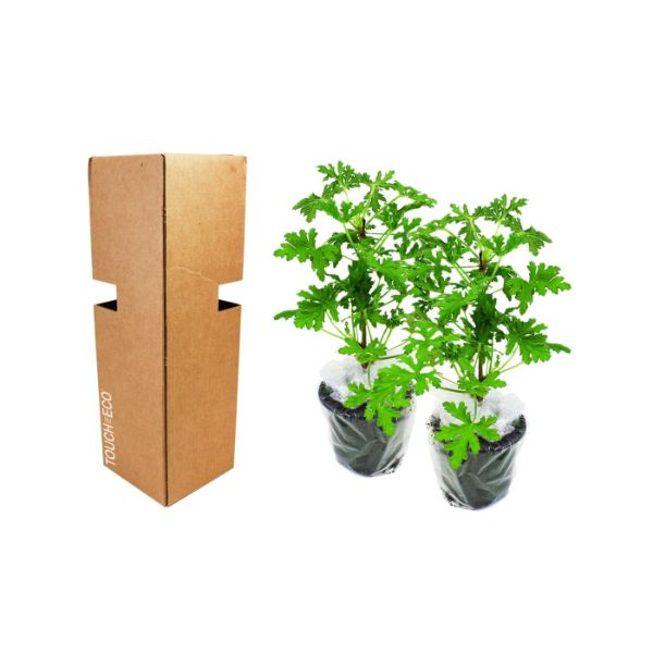 Citronella Anti-Mosquito Plants - 2, 4, or 8 Pack with Shovel-2-Pack-Daily Steals