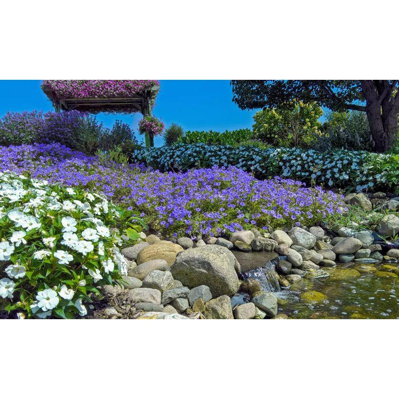Rock Garden Mixed Collection Flower Bulbs - Pinks, Purples, Whites and Blues-55 Flower Bulbs-