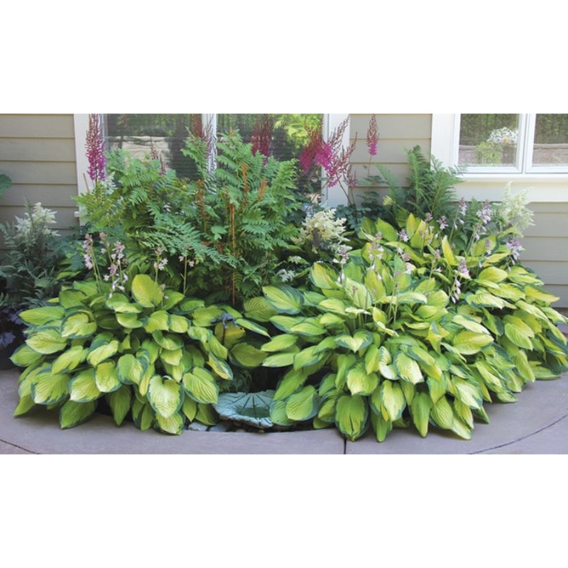 update alt-text with template Daily Steals-Mixed Heart-Shaped Hosta Bare Roots - 9 Pack-Outdoors and Tactical-