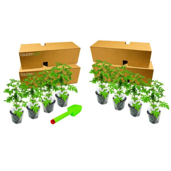 Citronella Anti-Mosquito Plants - 2, 4, or 8 Pack with Shovel-8-Pack with Planting Tool-Daily Steals