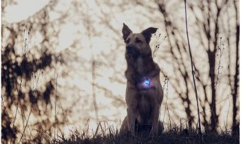 Daily Steals-Water-Resistant LED Dog Collar Light Charm-Pets-Blue-Pendant-