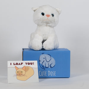 White Kitten Care Package - Cute Dose