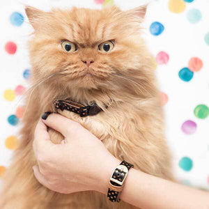 Dotty Moggy Cat Collar - Cute Dose