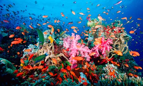 Fort Lauderdale Miami Coral Reef Conservation - How You Can Help