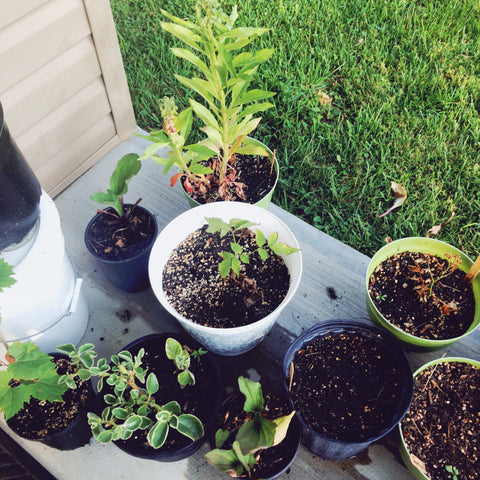 Soil and Water for Your Garden