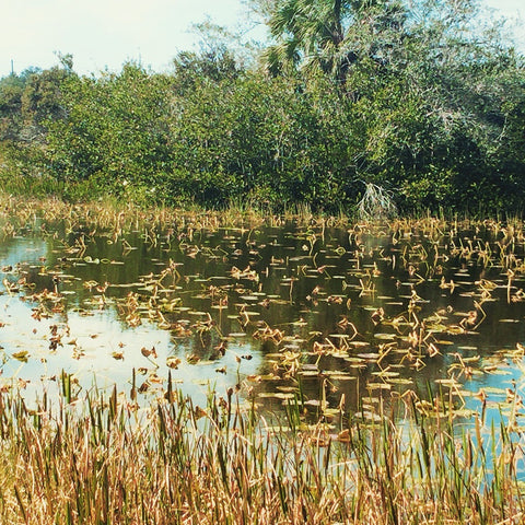 How Nature Calms Anxiety & Cares Lake in Florida