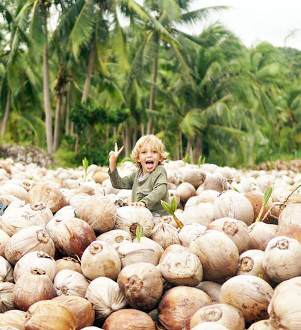 Learn How to Plant, Grow, and Care for Your Coconut Tree