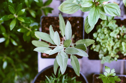Beginners Guide to Conquering Anxiety & Depression Through Gardening