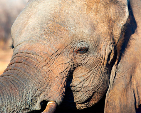 Elephant 3 Simple & Effective Ways to Prevent Wrinkles