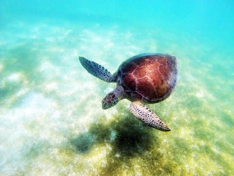 Real Photo My Husband Shot While Snorkeling In The Mexican Riviera
