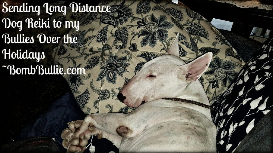 Sending Long Distance Dog Reiki to my Bullies Over the Holidays