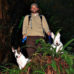 Bull Terrier Blog - Be the Leader of Your Pack