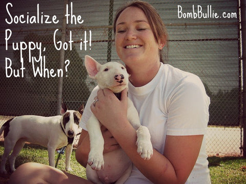 BombBullie Puppy Socialization Blog Pic 1