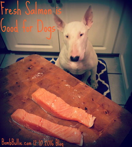 Is Salmon is Good For Dogs - BombBullie.com Blog