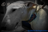 Paracord Martingale Dog Collar - King Cobra Knot - BombBullie  - 4