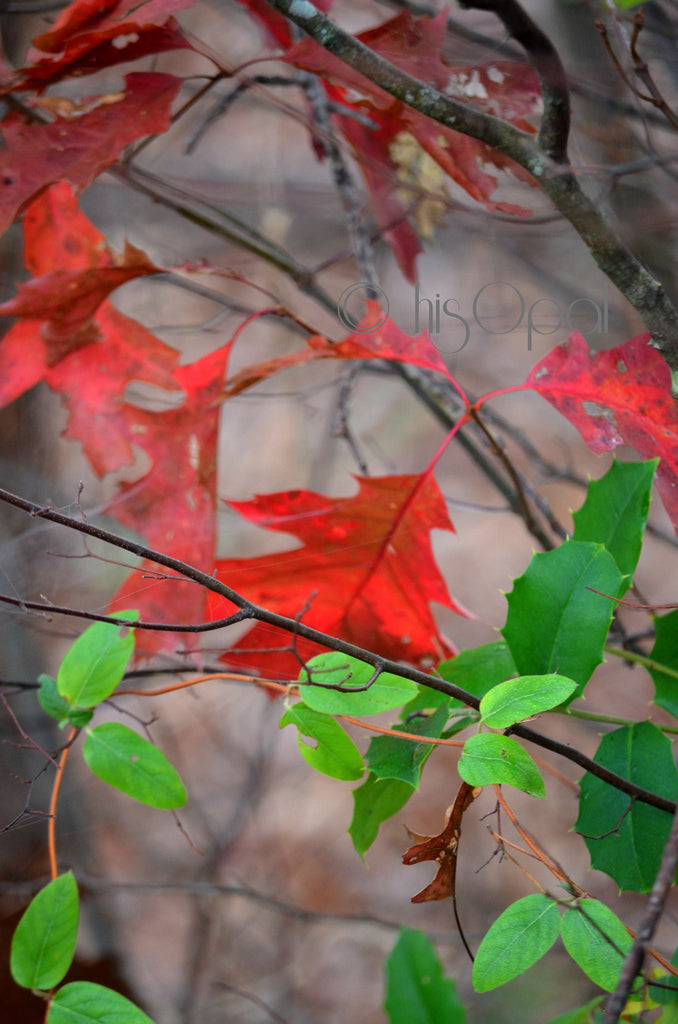 digital download nature photography: autumn leaves 5 - hisOpal Swimwear