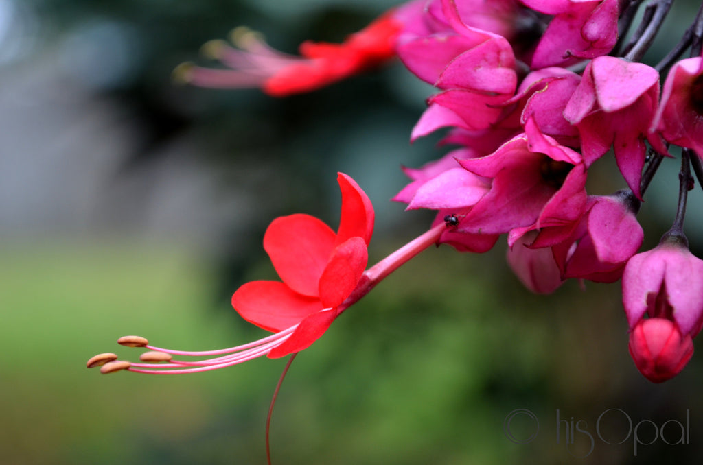 digital download nature photography: hot pink flowers 3 - hisOpal Swimwear