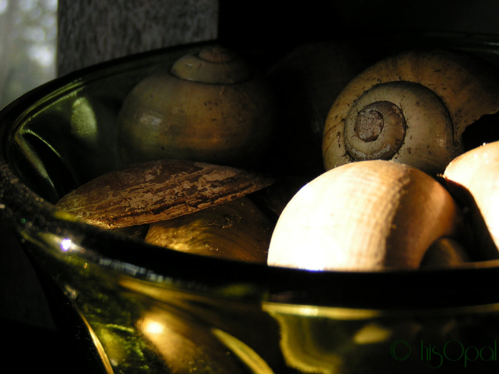 digital download photography: shells in a bowl with sunlight - hisOpal Swimwear