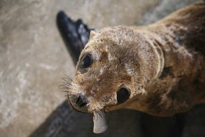 Save The Sea Lions Straw Pack