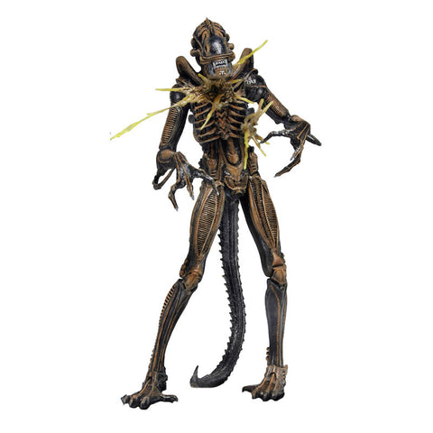 Aliens Series 12 - Alien Warrior (brown)