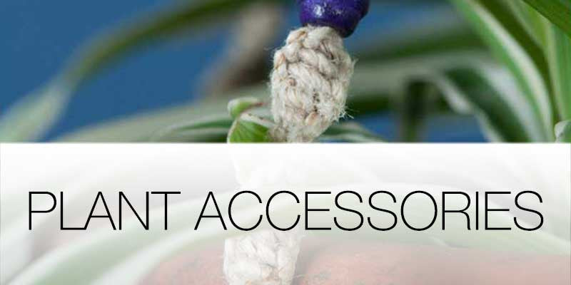 Plant accessories on Hutsly