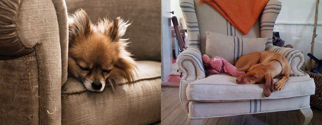 Dogs on armchair - Choosing the perfect armchair - 7 steps for the ultimate guide - Hutsly
