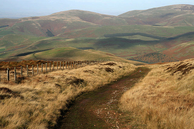 Cheviot Hills Walk