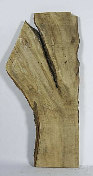 Live Edge Hardwood Slab: Ambrosia Maple, Rough Sawn