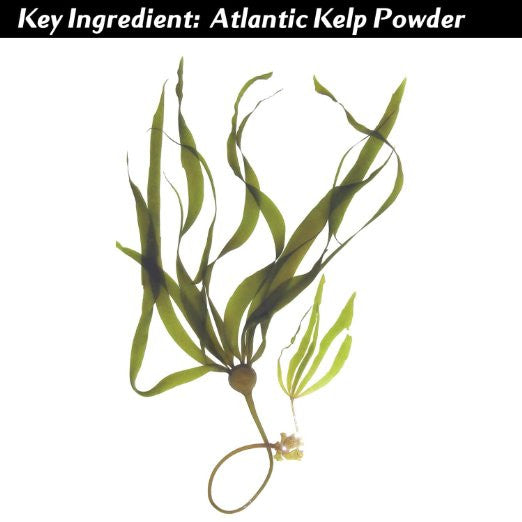 Vi-Tae Ingredient Laminaria Digitata (Atlantic Kelp) Extract