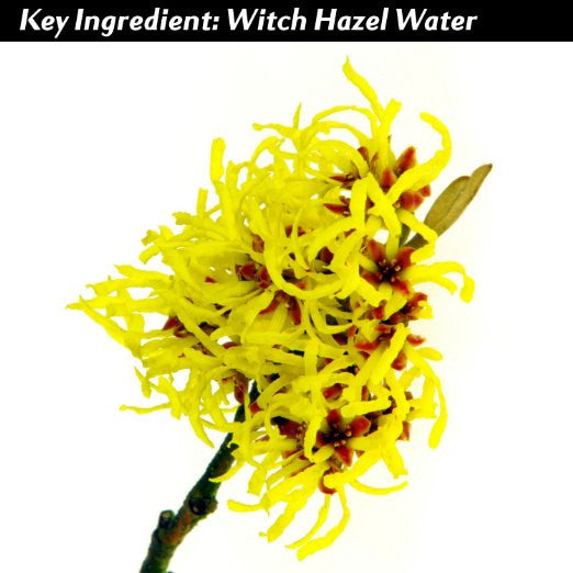 Vi-Tae Ingredient Witch Hazel Water