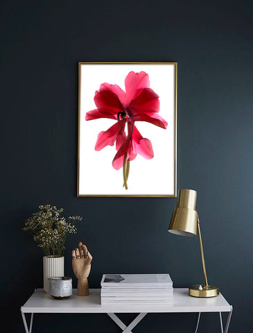 Floral photography on dark wall. Artwork by Julia McLemore