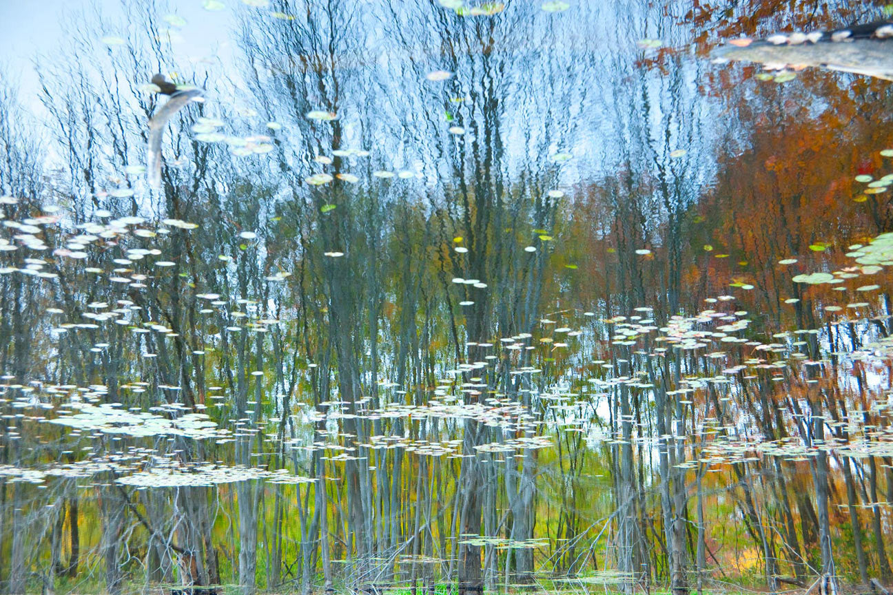 Reflections 11 / 36 x 24 / photograph on archival paper