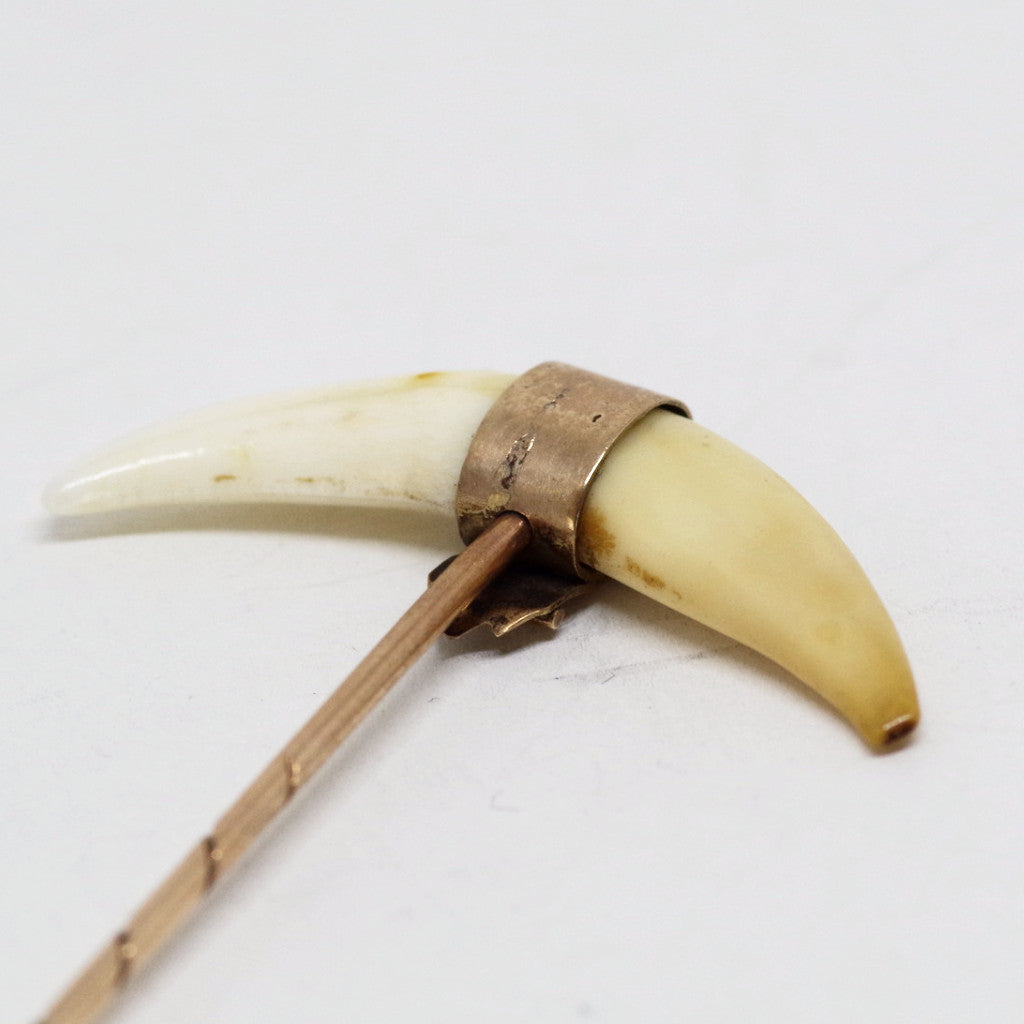 Victorian Tiger Tooth Gold Stick Pin
