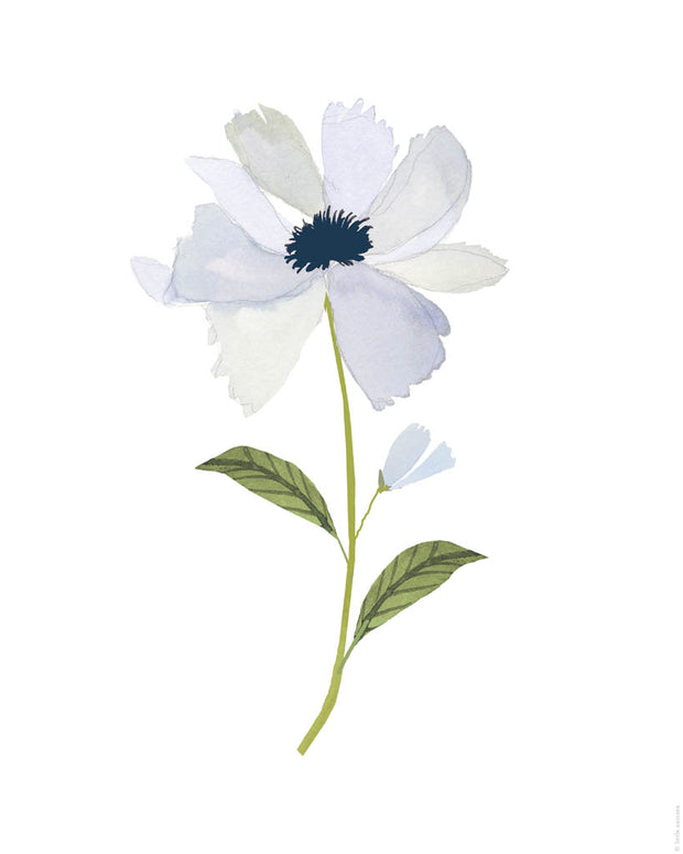 Printable Download - Blue Windflower 1
