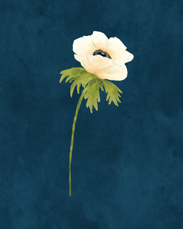 Printable Download - White Anemone