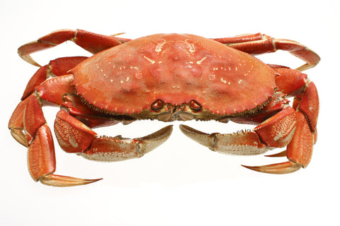 Dungeness Crab (Whole)