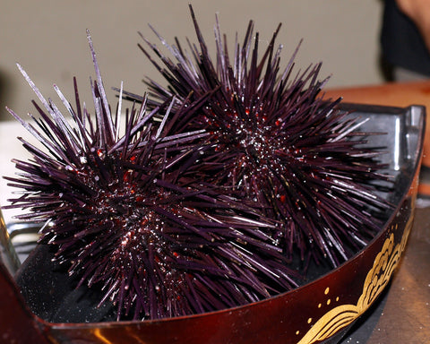 Live Whole California Red Sea Urchin