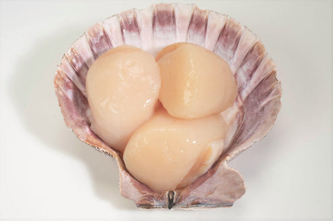 10-20 Sea Scallops, Frozen (IQF) Dry Pack