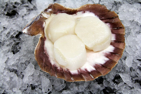10-20 Sea Scallops, Fresh Dry Pack