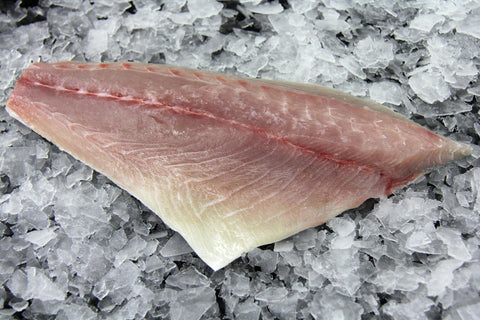 Fresh Baja Farmed King Kampachi Sushi Grade Yellowtail