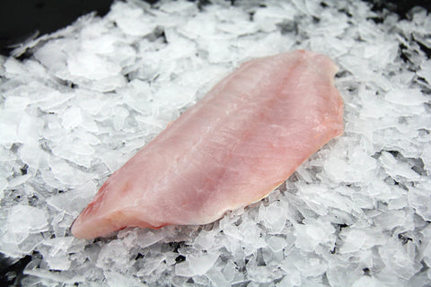 Fresh California Sheephead Fillet
