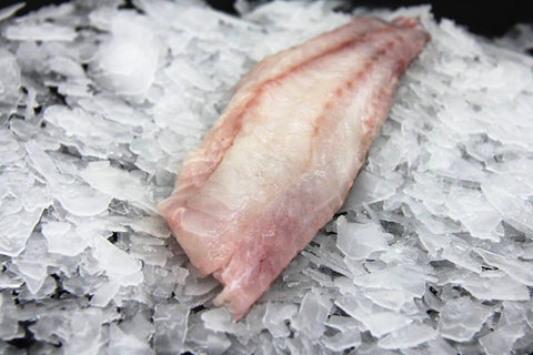 Fresh Sculpin Fillet