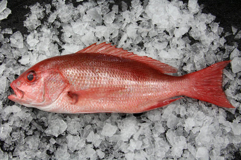 Fresh Whole Pacific Snapper