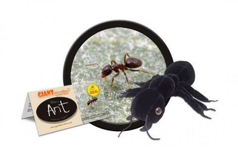 Black Ant (Lasius Niger) - GIANTmicrobes® Plush Doll  - LabRatGifts - 1