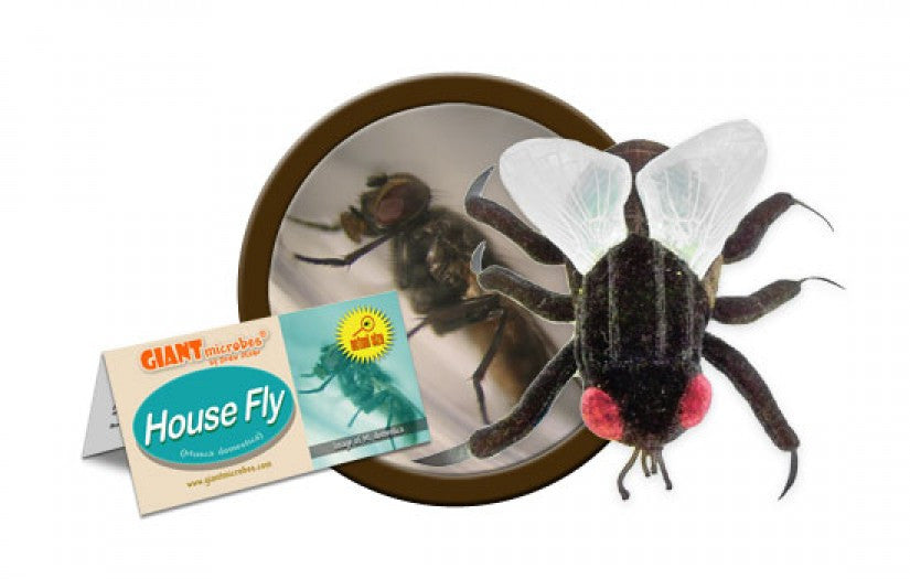 House Fly (Musca domestica) - GIANTmicrobes® Plush Toy  - LabRatGifts - 1