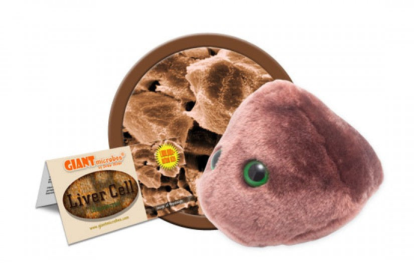 Liver Cell (Hepatocyte) - GIANTmicrobes® Plush Toy  - LabRatGifts - 1