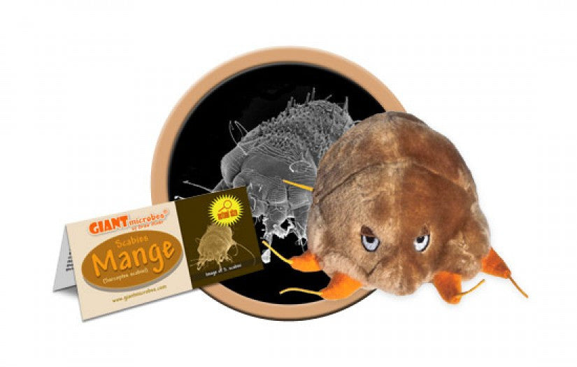 Mange (Sarcoptes scabei) - GIANTmicrobes® Plush Toy  - LabRatGifts - 1