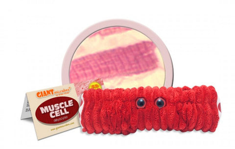Muscle Cell (Myocyte) - GIANTmicrobes® Plush Toy  - LabRatGifts - 1