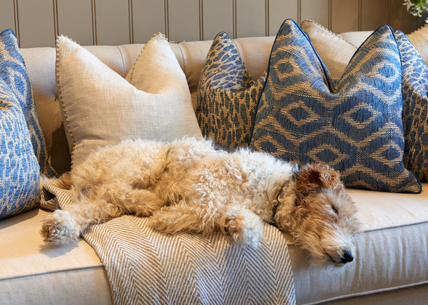 Casper the fox terrier asleep on our Heavenly sofa surrounded by cushions
